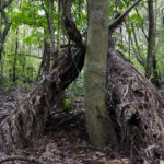 Building a Long-Term Wilderness Survival Shelter