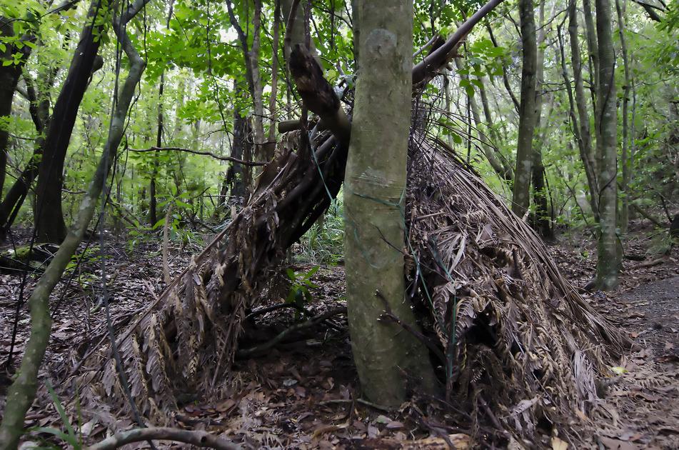 Preživljavanje u prirodi - Page 4 Photodune-5736927-wilderness-survival-debris-huts-s-1