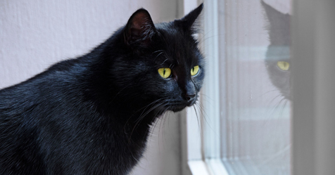 Black Cat Facts You Should Know