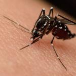 Update on the Zika Virus