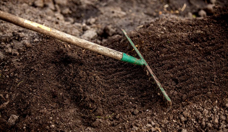 fertalize soil